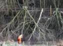 A fost trimis în judecată un bărbat din Gepiu, bănuit că ar fi furat dintr-o pădure material lemnos de peste 31.000 de lei
