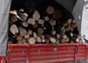 Lemne de foc fără documente legale, confiscate de polițiști în Borod și Valea lui Mihai