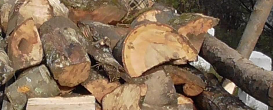 698 de metri cubi de lemn rotund, expediați fără documente legale, confiscați de polițiștii bihoreni