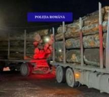Peste 35 de metri cubi de bușteni, transportați fără documente legale, confiscați de polițiștii din Borod