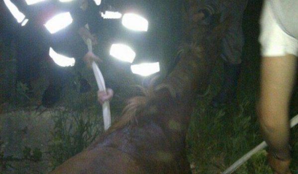 Mânz căzut într-o fântână, în localitatea Mădăras, salvat de pompieri